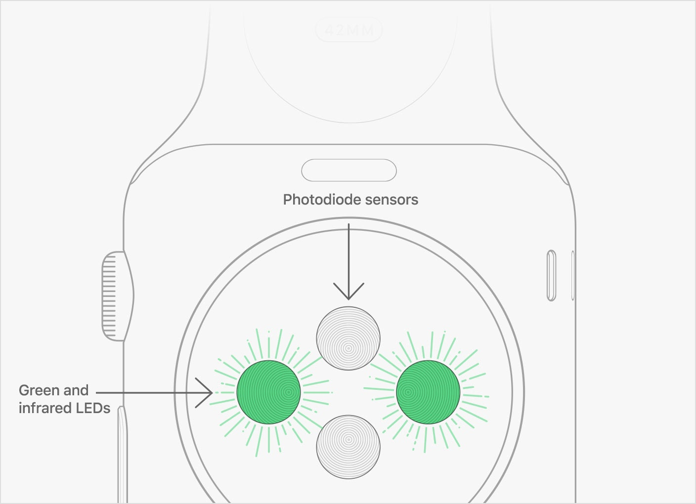 apple watch heart rate tracking system