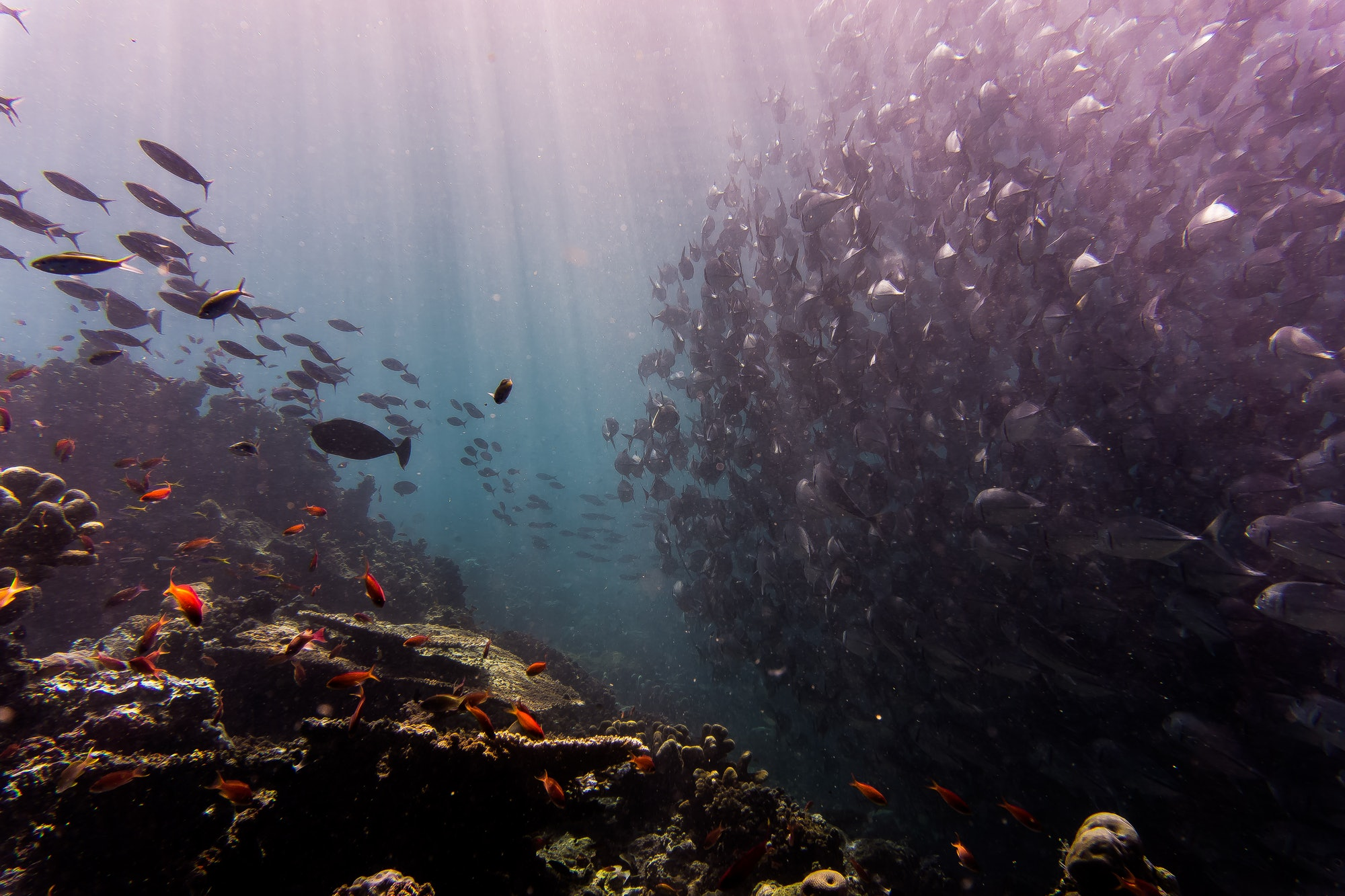 coral reefs artificial intelligence
