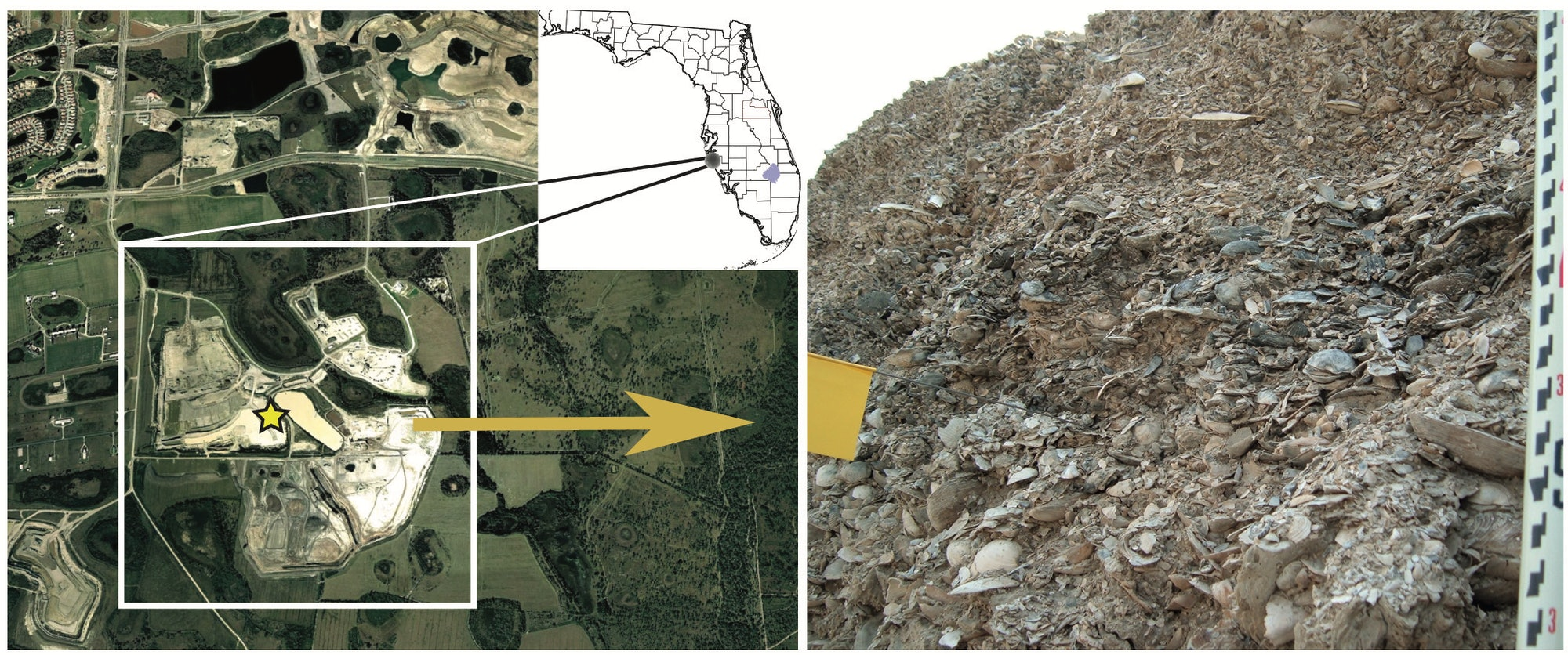Meyer was looking for fossils in a quarry near Sarasota, Florida. The site is now a ranch.