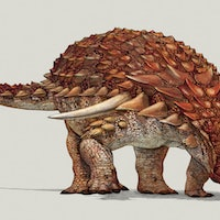 Alberta's Famous Nodosaur Was a Redhead, Groundbreaking Study Shows