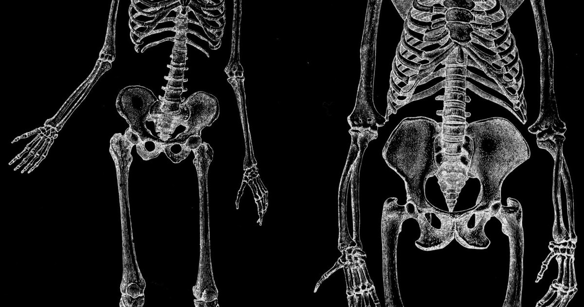 'Uniquely Human' Muscles Found in Apes Switches Up Evolutionary Dogma