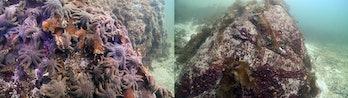 sea star death