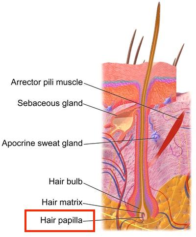 hair follicle drug test marijuana