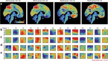 Scene-level pattern similarity between individuals.