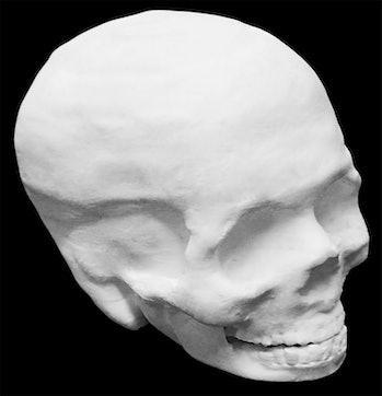 Photograph of a Hyperelastic Bone human skull. Interior of the skull is hol...