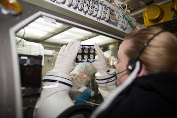Astronauts examined the cell culture plates onboard the ISS