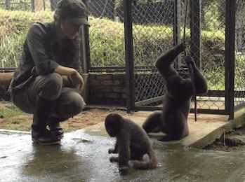woolly monkeys