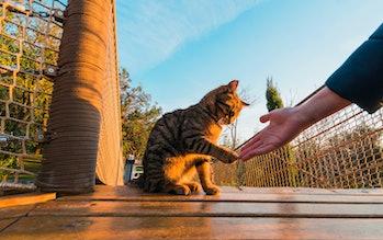human cat relationship