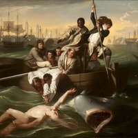 Shark Week Unofficially Began 240 Years Ago Thanks to John Singleton Copley