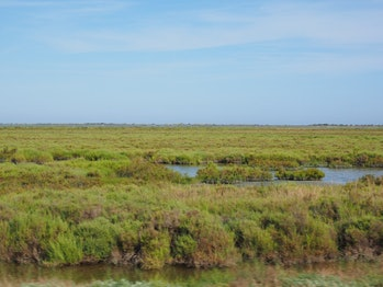 marsh, saltwater, climate