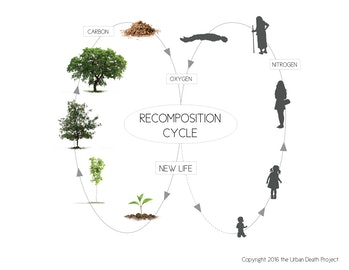 cycle urban death decomposition life cycle plants