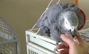bud parrot murder case