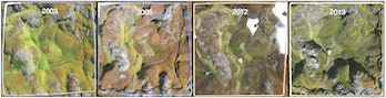 These images show how one of the sample quadrants changed over the 13-year study period. The increased concentration of red and brown (especially obvious in 2008 and 2012) indicates that the mosses are stressed. In addition to the stress, though, the relative abundance of S.antarcticiwas decreasing while the relative abundance of C.purpureusand B.pseudotriquetrumwas increasing.