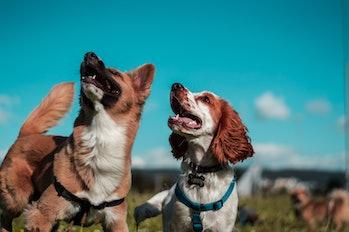 dogs park