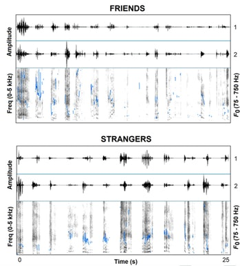 Researchers showed that the sounds of friends or strangers laughing together are noticeably differen...