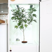 Grow Your Medicinal Weed in this Automated Fridge