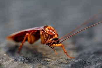 Cockroaches and termites are more similar than you might have thought.