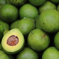 Avocado Study: Researchers Pay Participants $300 to Eat One per Day