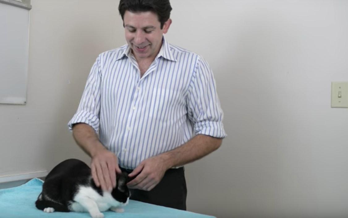 cat holding