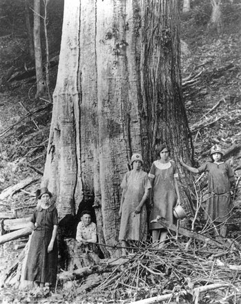 The family of James and Caroline Shelton poses by a large dead chestnut tree in Tremont Falls, Tennessee, circa 1920.