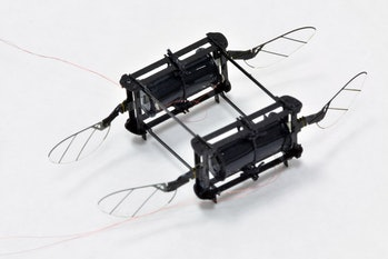 RoboBee robot animal soft actuator
