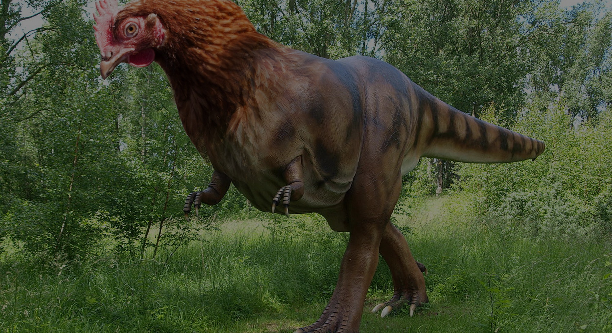 Scientists Are Reverse Engineering A Dinosaur From A Chicken