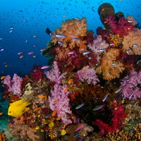 Hungry fish in certain areas protect sensitive coral against bleaching