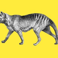 A recount of every extinct Australian animal species has a crushing result
