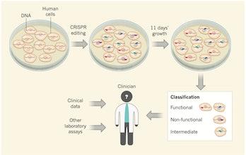 CRISPR BRCA1 breast cancer