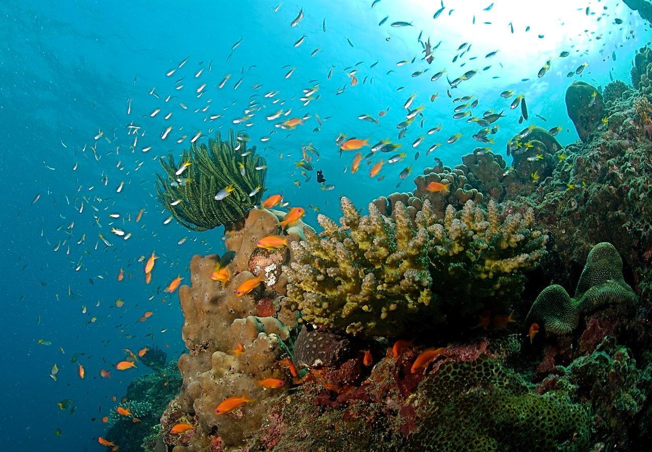 Coral Reef at the Andaman Islands