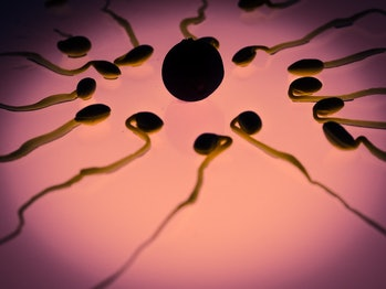 sperm count men