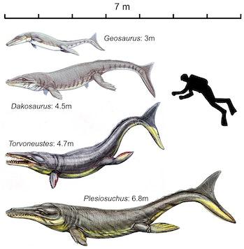 geosaurini jurassic