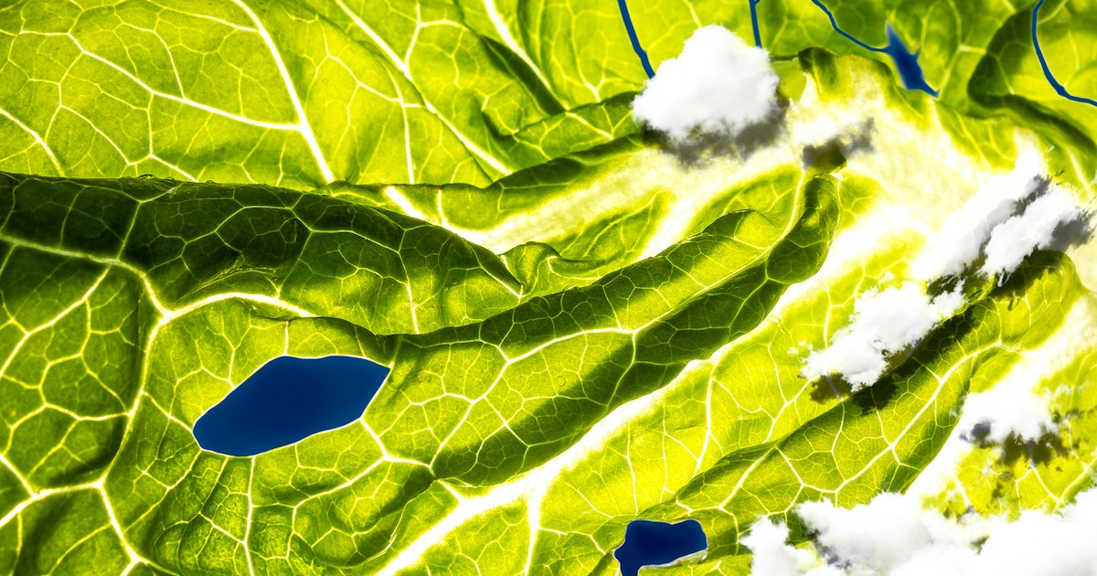 E. Coli Romaine Lettuce Outbreak: Everything Scientists Still Don't Know