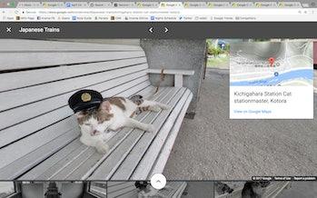 Cat Google Street View