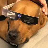 Are Dogs Affected by the Solar Eclipse? How to Keep Your Pets Safe