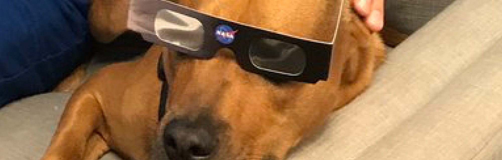 Are Dogs Affected By The Solar Eclipse