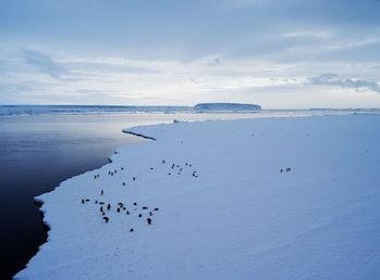 Antarctica sea level rise
