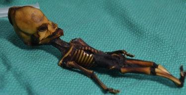 atacama skeleton alien humanoid
