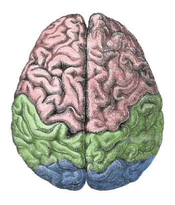 happiness brain