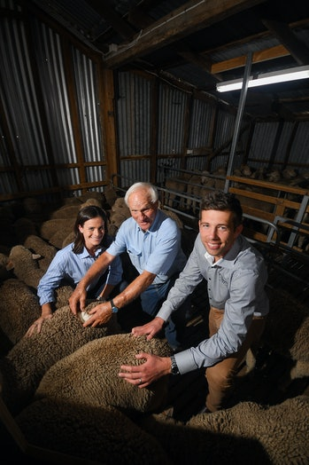 Rickard (left), Walker (middle), and de Graaf (right) examine the lambs produced from the vintage semen.