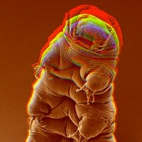 Inverse Daily: Tardigrade Tragedy on the Moon