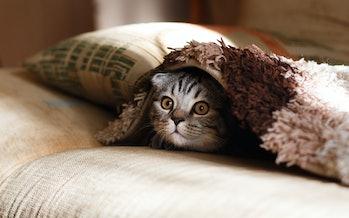 cats international cat day