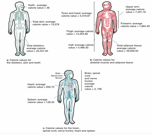 The caloric value for different components of the human body.