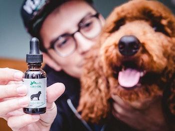CBD Oil, bacon CBD oil, pet CBD oil, bacon for pets