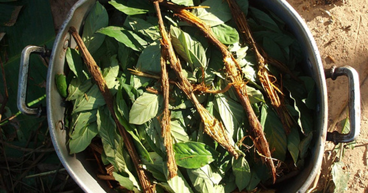 How an Amazonian Psychedelic Brew Could Be Used to Treat Depression