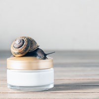 The health benefits of snail slime on your face are nothing to sneeze at