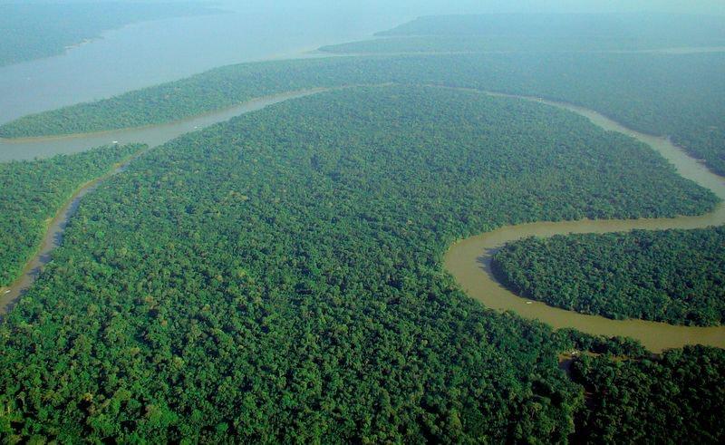 tree cover amazon