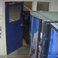 Hungry Bear Sneaks Into California Facility, Opens Door in Video