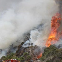 Ancient Forests Burn in Tasmania, Some Blame Climate Change