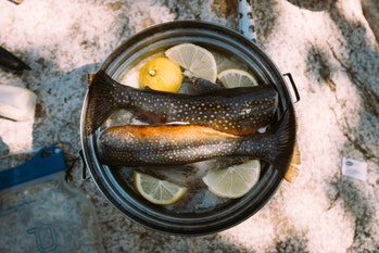 Inland fish caught for subsistence rather than for sale are hugely underreported, the new study find...